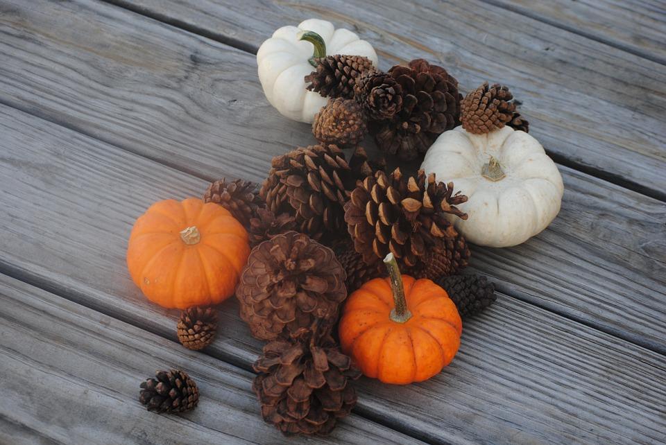 pumpkin, pine cone, fall