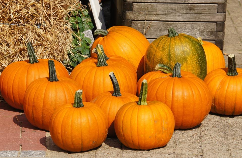 pumpkins, autumn, halloween