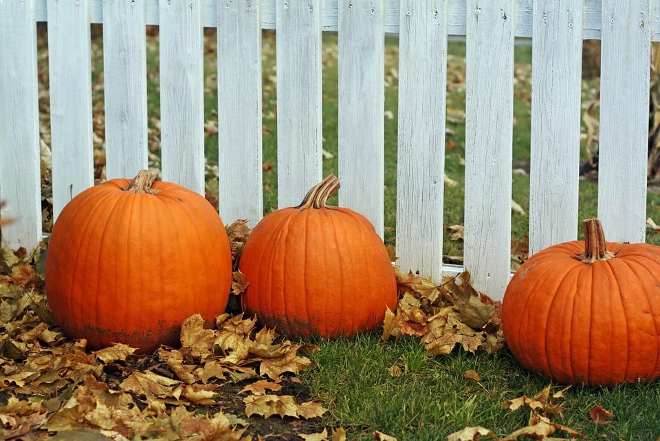 pumpkins, fence, thanksgiving