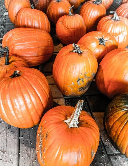 halloween, pumpkins, autumn