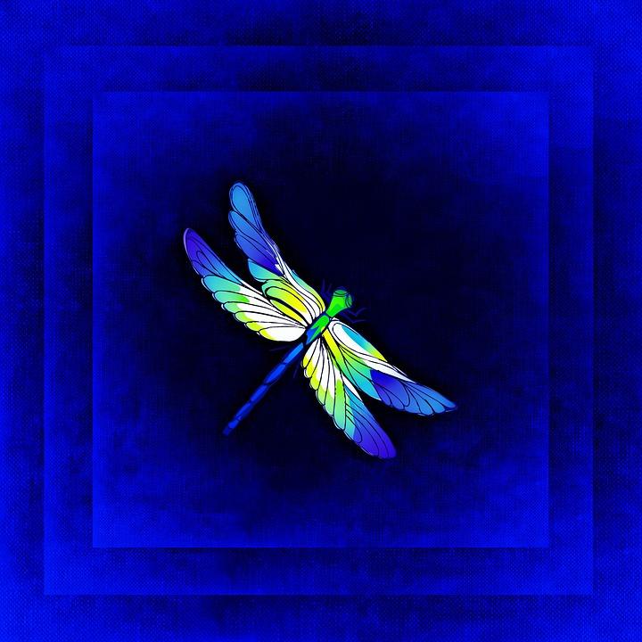dragonfly, frame, image