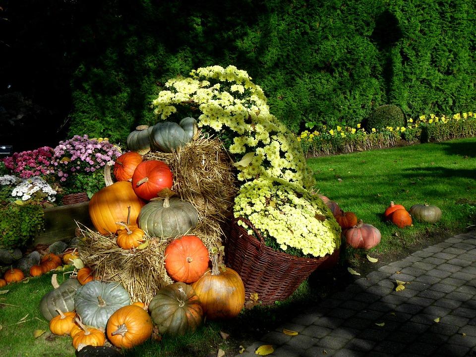thanksgiving, pumpkin, autumn