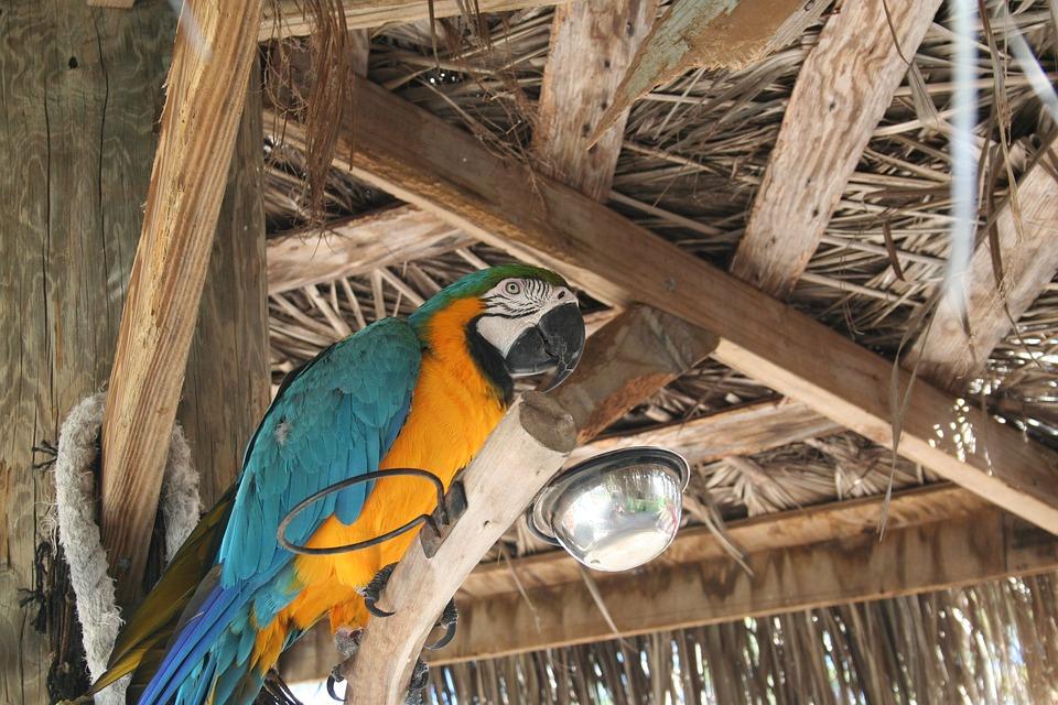 bird, tropical, nature