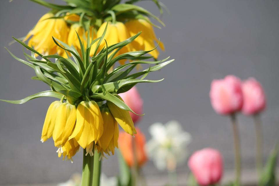 plant, exotic, yellow