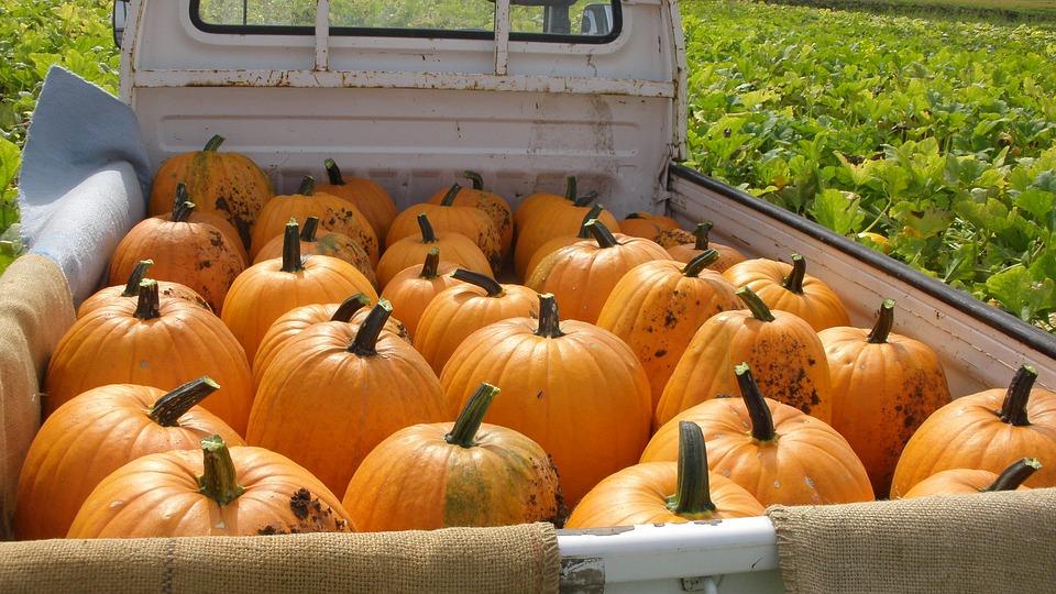 pumpkin, halloween, vegetables