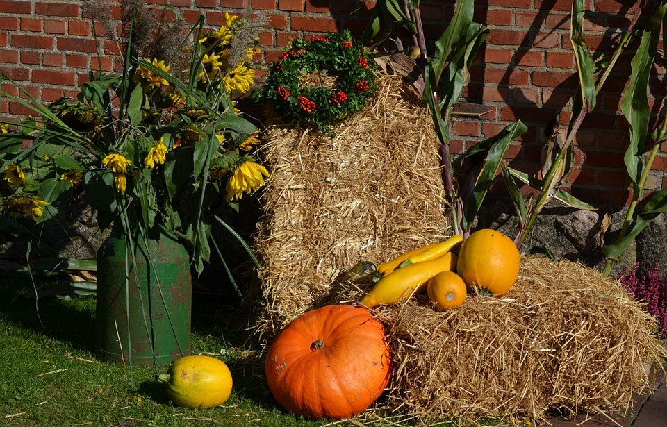 thanksgiving, pumpkin, autumn decoration