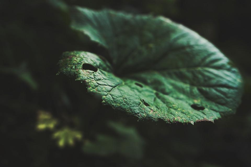 leaf, plant, macro