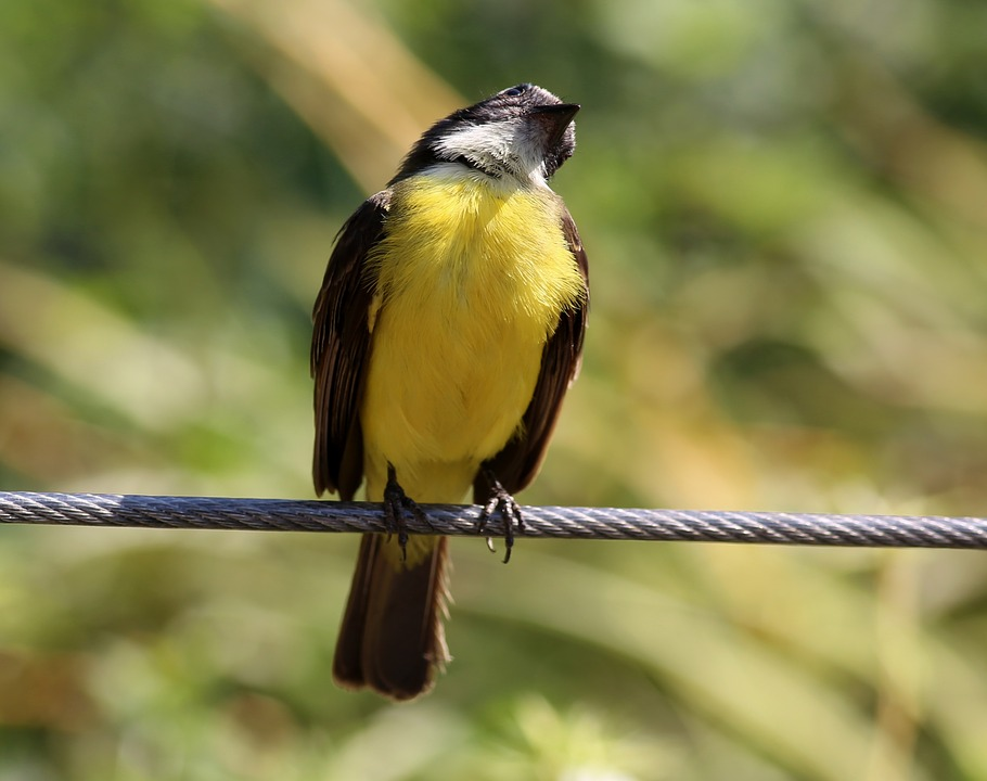 colorful bird, bird on the wire, tropical