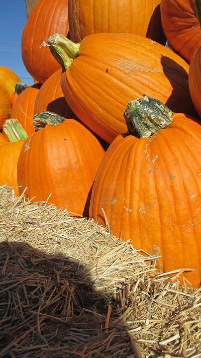 thanksgiving, halloween, pumpkin