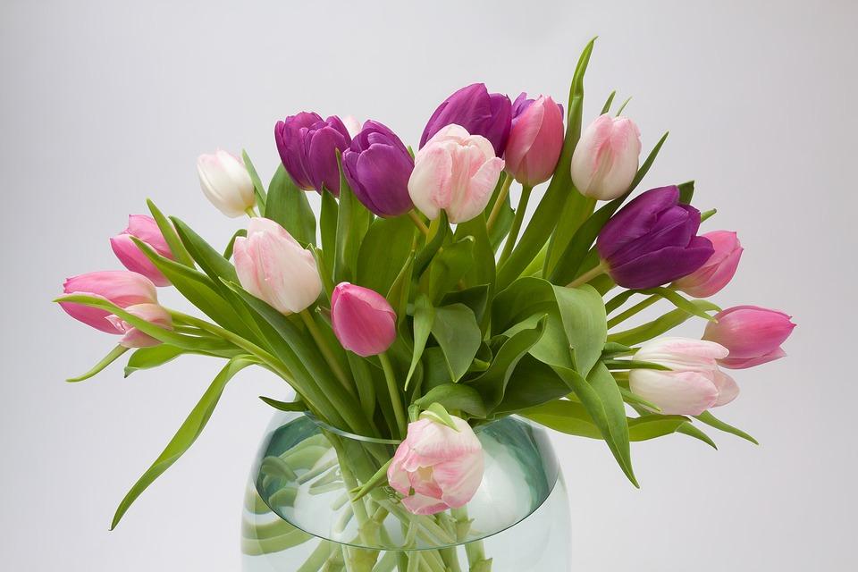 tulip, spring flower, bouquet