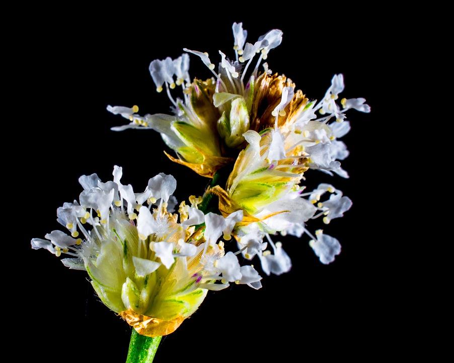small flower, wild flower, white
