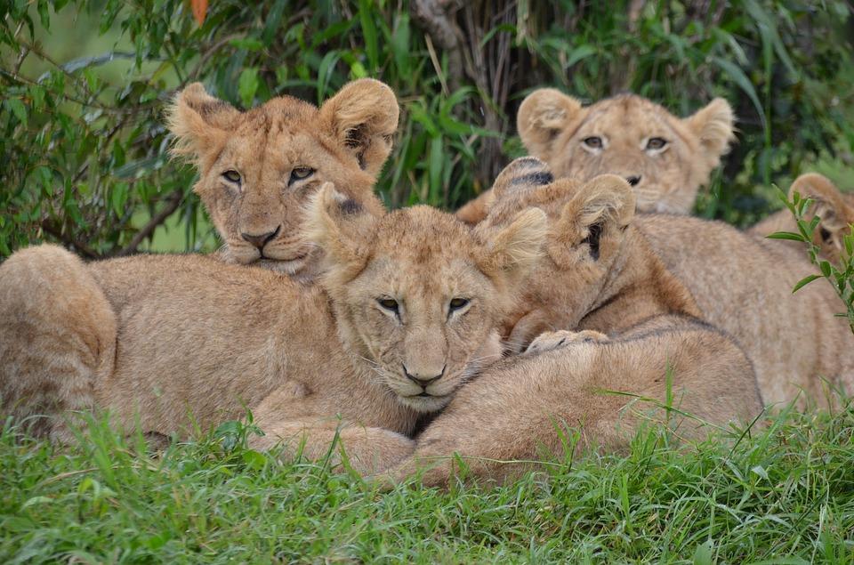 nature, africa, wildlife