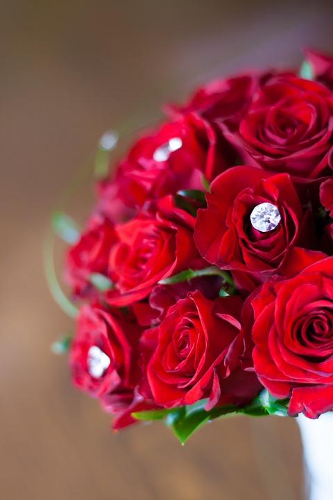 red, roses, bridal