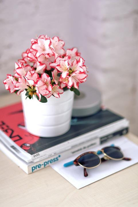 azalea, white pot, sunglasses