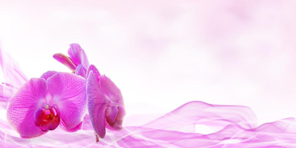 wellness, beauty, flower