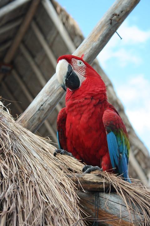 parrot, bird, tropical