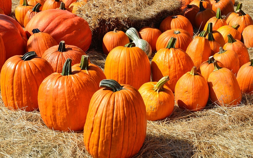 pumpkins, for sale, sell