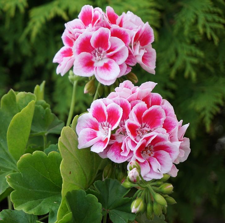 Flowers Pink White Flower Stock